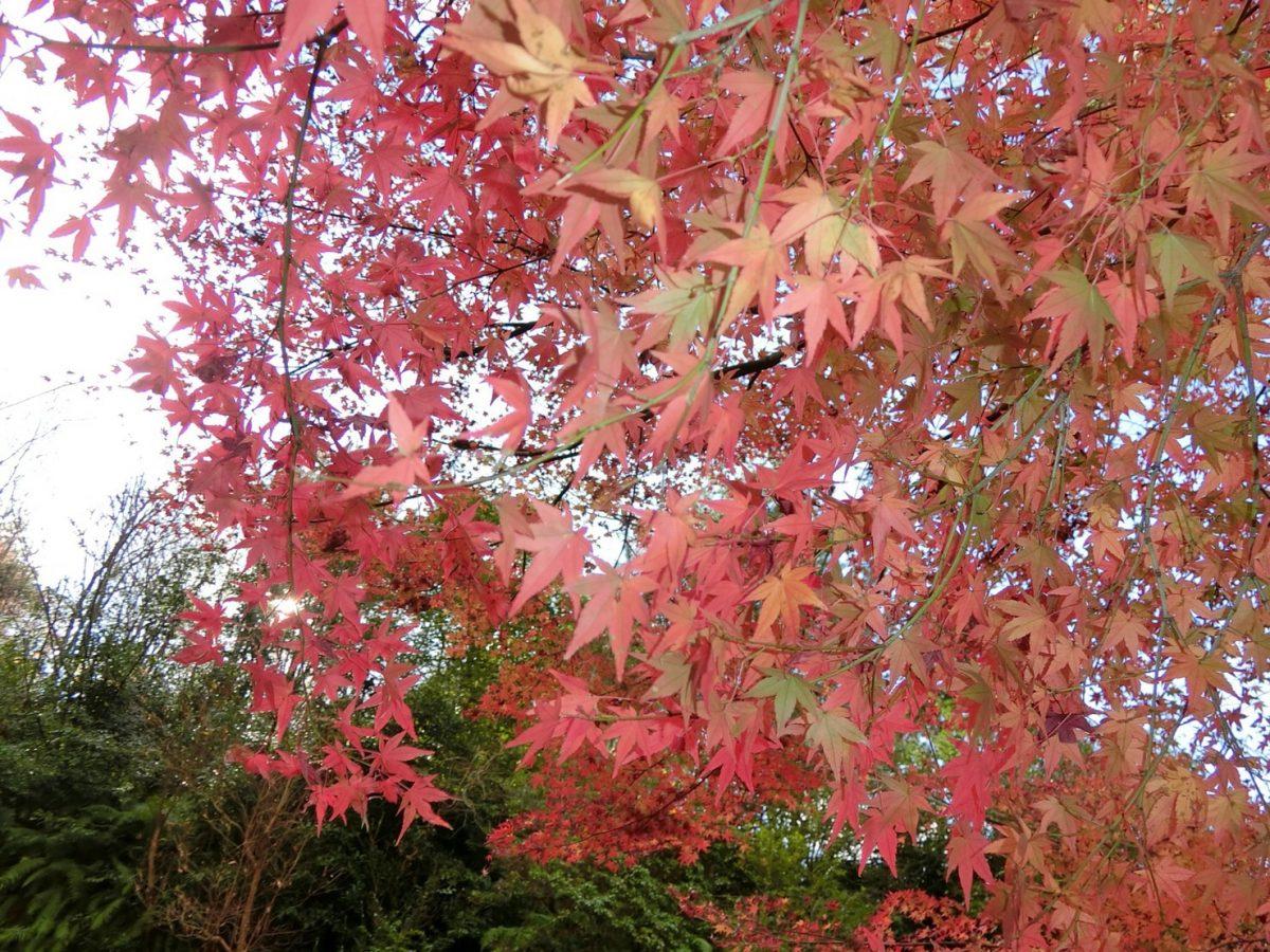 社員旅行に行って参りました 桜井・橿原の分譲・注文住宅の日生ハウジング